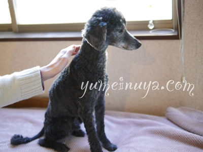 yumeinuya.com