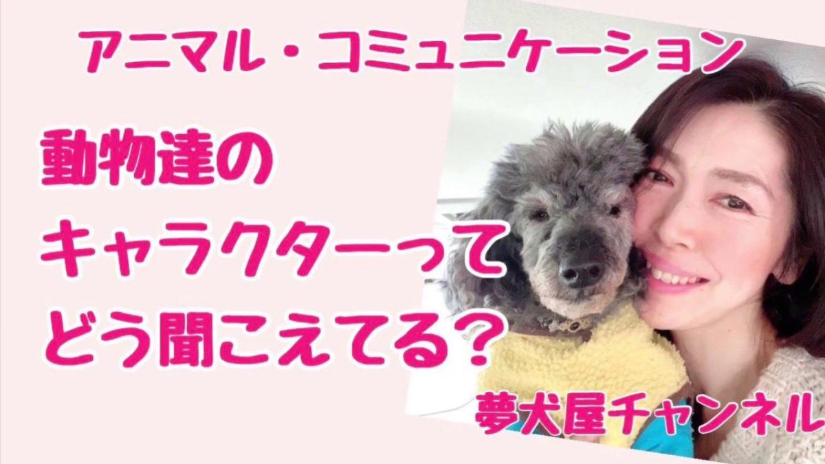 アニマルコミュニケーターは、動物達のキャラクターをどんな風にキャッチしてる?