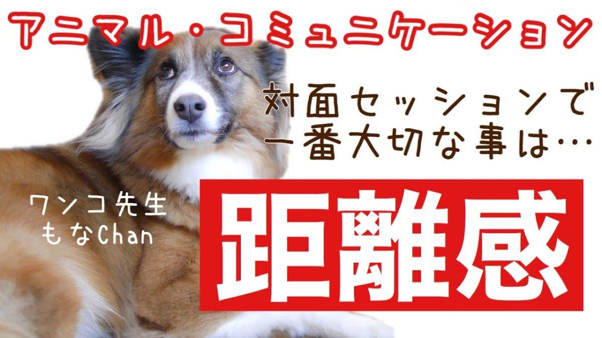 和犬さん、和犬MIXさんとのセッションで一番大切な事は、腕前ではございません。