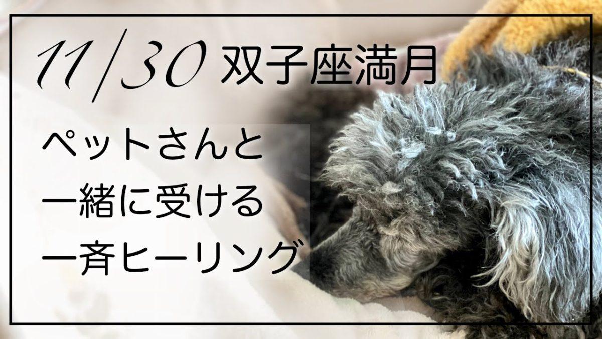 11/30 双子座満月 ペットさんと一緒に受ける一斉ヒーリング