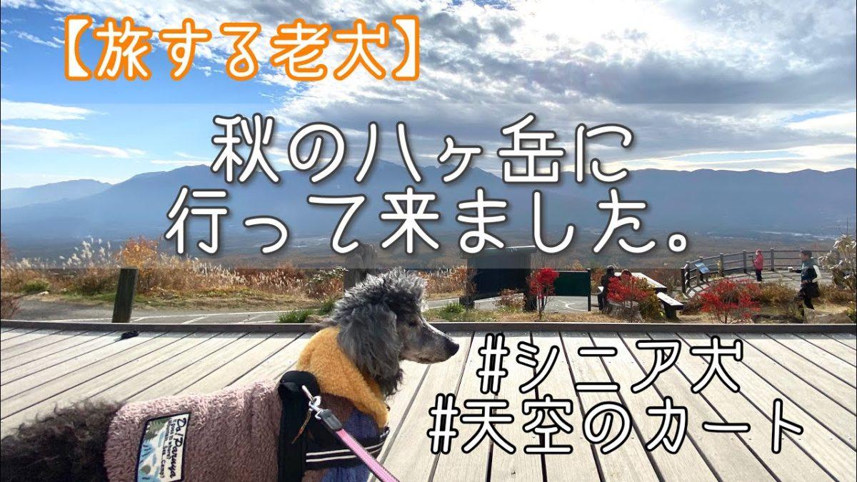 【旅する老犬】長野県松本市〜山梨県八ヶ岳に行って来た。〜日産セレナで車中泊